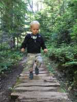 Forest Walk