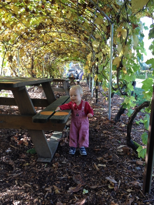 Tunnel of Grapes